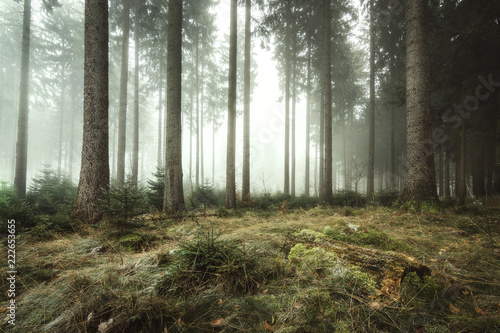 Herbstmorgen im Kaufunger Wald