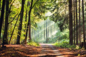 Obraz na Szkle Drzewa Licht im Wald