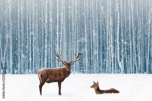 Family of noble deer in a snowy winter forest. Christmas fantasy image in blue and white color. Snowing.