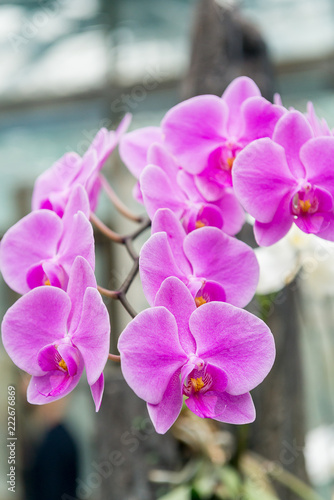 Foto op Canvas Bloemen Surprising in their beauty, flowering multicolored orchids grow in the orchidarium.
