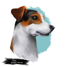 Jack Russell Terrier, Jack Russell, JRT, Jack Dog Digital Art Illustration Isolated On White Background. Enfland Origin Terrier Dog. Pet Hand Drawn Portrait. Graphic Clip Art Design For Web Print
