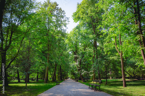 Fototapeta park beautiful-alley-with-green-trees-in-lazienki-park-at-warsaw-poland