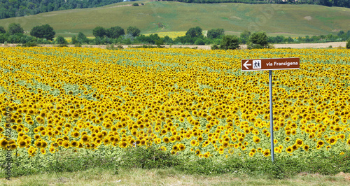 Spoed Fotobehang Meloen Via Francigena signpost and sunflower field, Tuscany