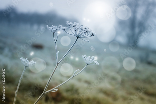 Canvas Prints Dandelions and water winter background with frozen grass and fog