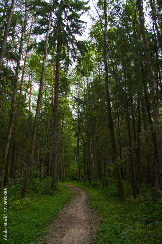 Tuinposter Weg in bos path in pine forest