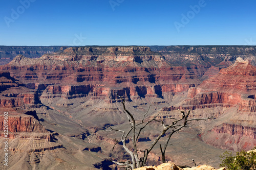 Tuinposter Verenigde Staten Scenic view of Grand Canyon with dead tree in forefront