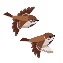 Flying Two Tree Sparrows Isola...