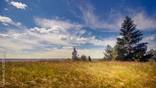 summer countryside. Beautiful landscape with a spruce on the right against a cloudy sky and grass in the foreground