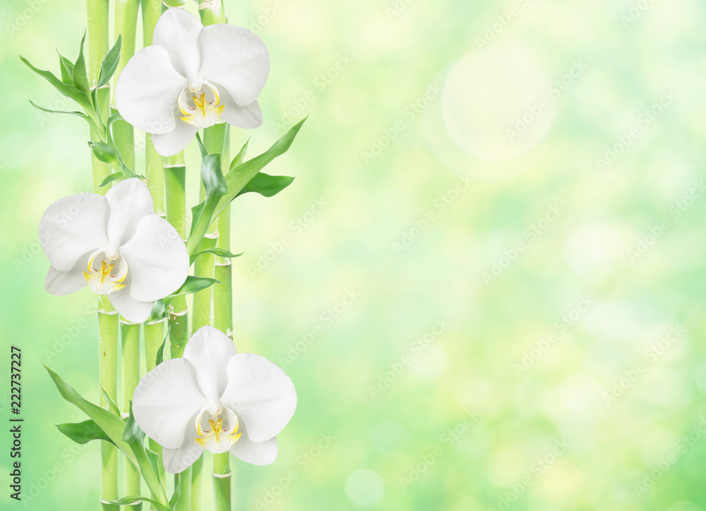 Lucky Bamboo and white orchid flowers on natural background