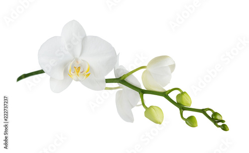 Autocollant pour porte Orchidée Moth orchid on white
