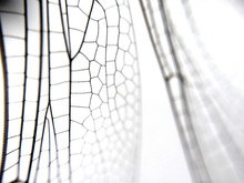 Dragonfly Wing Close Up Background With Zoomed Transparent Lattice