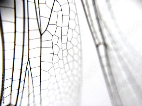 Fotografiet Dragonfly wing close up background with zoomed transparent lattice