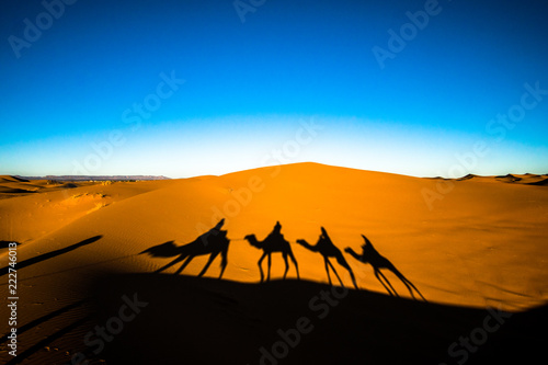Tuinposter Kameel Wide angle shot of people riding camels in caravan over the sand dunes in Sahara desert with camel shadows on a sand