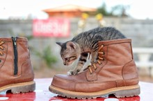 Cat In The Boots