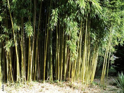 In de dag Bamboo Bambou