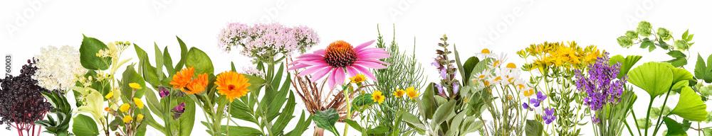 Fototapety, obrazy: Various medical plants