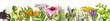 Leinwanddruck Bild - Various medical plants