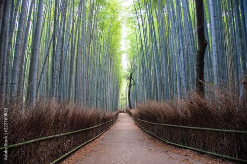 In de dag Bamboo Bamboo forest in Arashiyama, Japan