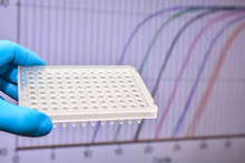 Real-Time PCR Research In The Laboratory.