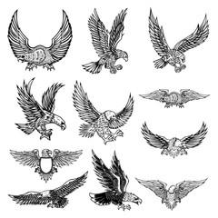 Ilustracija letećeg orla izoliranog na bijeloj pozadini.