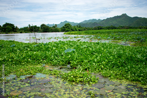 Deurstickers Groene river with water lilies