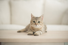 Cute Cat Lying On Wooden Table...