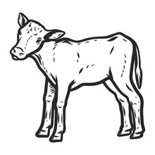 Veal Icon. Hand Drawn Illustration Of Veal Vector Icon For Web Design