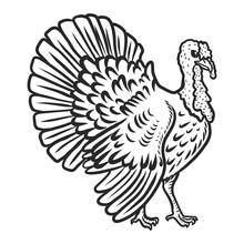 Turkey Cock Icon. Hand Drawn I...