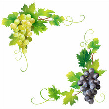Angle Borders With Grape Isolated On White. Vector Illustration.