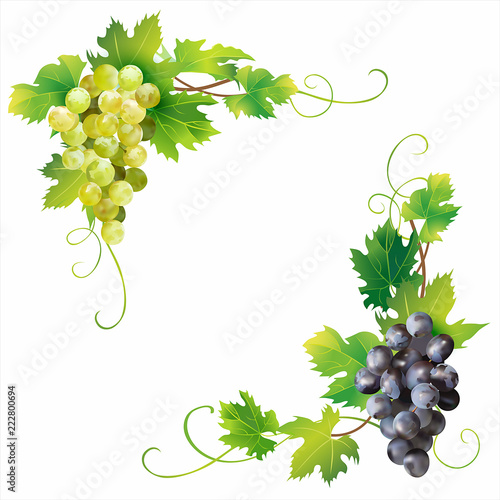 Angle borders with grape isolated on white. Vector illustration. Fototapete