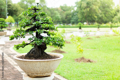 Deurstickers Bonsai Bonsai tree in the garden, image use for planted to decorate.