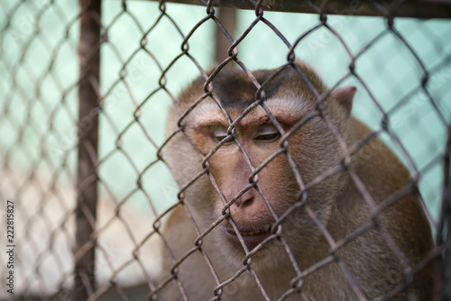 Foto op Canvas Aap Unhappy unhealthy monkey in the steel cage