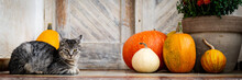 Halloween Decorated Front Door With Various Size And Shape Pumpkins. Cat On Front Porch Decorated For The Halloween, Thanksgiving, Autumn Season Banner.