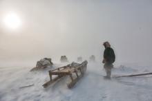 Nenets Reindeer Herders Choom On A Winter Day