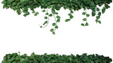Nature frame of green variegated leaves of devil's ivy or golden pothos (Epipremnum aureum), tropical foliage plant bush wish hanging vine branches isolated on white background, clipping path.