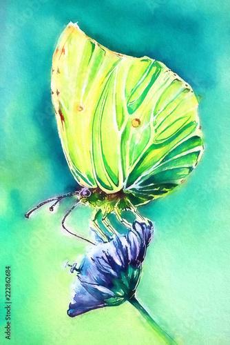 cypr-akwarela-motyl