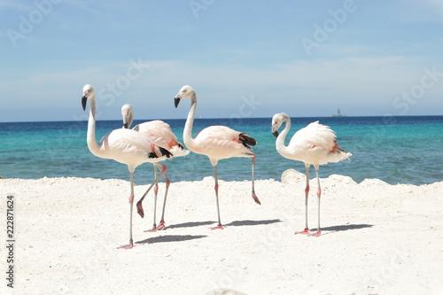 Keuken foto achterwand Flamingo Flamingos na areia branca contra o mar