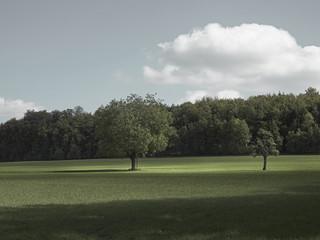 Fototapeta Wiese mit Bäumen