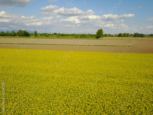 Fotografie, Obraz  Campo di fiori gialli