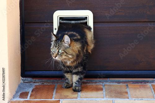 Eine Katze geht durch eine Katzenklappe Canvas Print