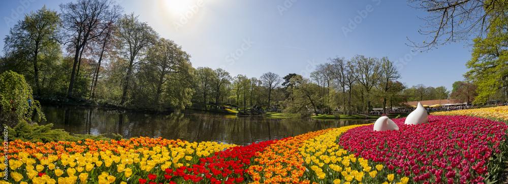 Fototapety, obrazy: Super colorful tulips blossom in the famous Keukenhof