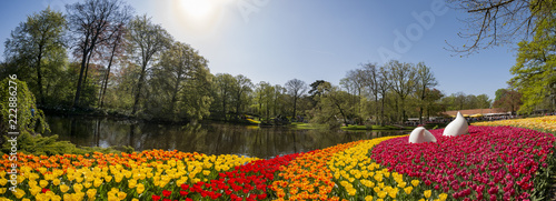 Foto op Canvas Tulp Super colorful tulips blossom in the famous Keukenhof