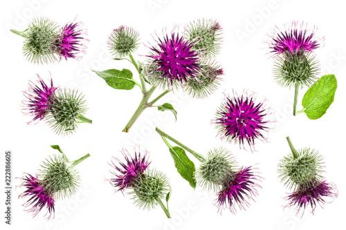 Carta da parati Burdock flower isolated on white background