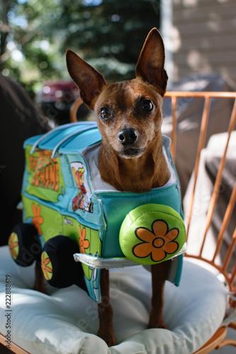 Keuken foto achterwand Crazy dog Halloween Costume For Pets - Scooby Doo