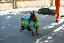 Scooby Doo Costume For Pets