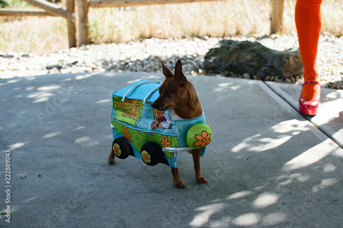 Photo  Scooby Doo Costume For Pets