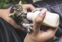 Bottle Feeding The Little Cat.