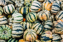 Miniature Pumpkins Show Fall Colors After Harvest