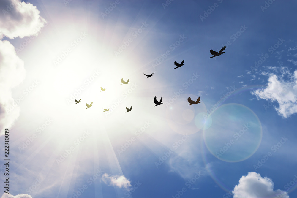 Birds flying in v shaped. Silhouette flock of birds flying  across cloud blue sky  with sunray in background ,lens flare effect.