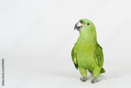 Funny green parrot Wallpaper Mural